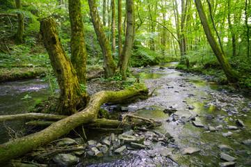 Fluss in einem Urwald aus Laubbäumen, Westerwald, Brexbachtal