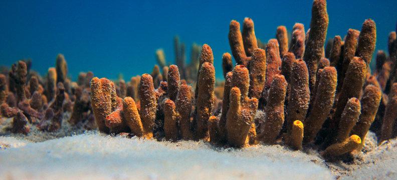 Yellow sponge underwater