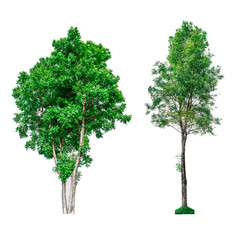 Collection of green trees isolated on white background