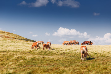 Mountain landscape with grazing horses and clouds
