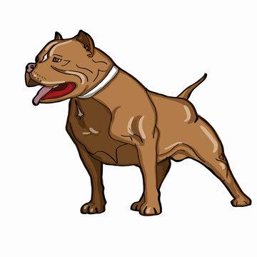 brown  pitbull dog thinking