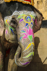 Elephant and shadow driver. Jaipur, state of Rajasthan.India