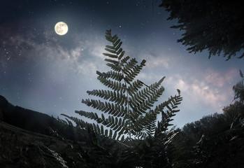 Fern leaf in the moonlight