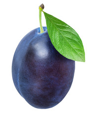 Blue plum isolated on white background