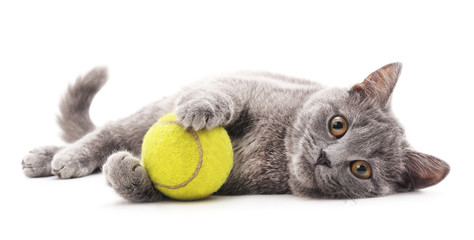 Gray cat with ball.