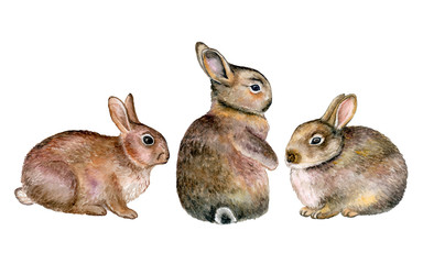 Gray rabbits isolated on white background. Three. Watercolor. Illustration. Handmade