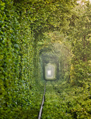 "Natural ""Tunnel of love"" formed by trees in Ukraine"