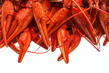 red crawfish with large claws, isolated on white background.