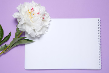 One white peony and a piece of paper lie on a lilac background.