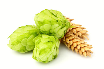 Papiers peints Biere, Cidre Fresh green hops, ears of barley and wheat grain isolated.