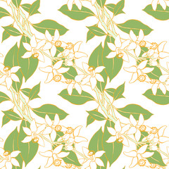 Seamless pattern with blossoming branches of the orange on white background. Flowers neroli. Vector illustration.