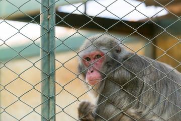 Macaco preso na jaula