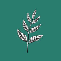Leaves on branches drawing nature vector icon on green background
