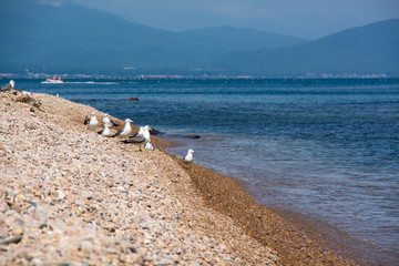 Flock of seagulls on a sea shore.