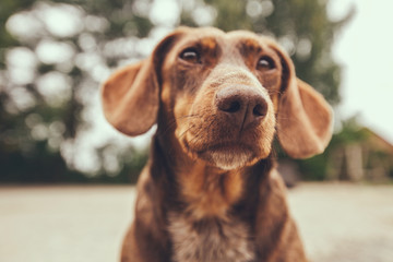 Portrait of a cute, curious dog looking away.