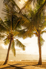 Tropical sky and palm trees by the ocean. Vintage retro colors post processed. Vacation, Caribbean, tropical, travel, and destination wedding concept