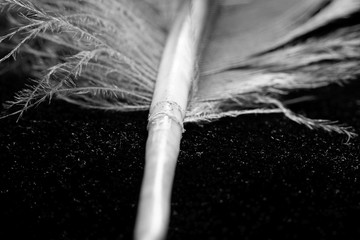 Part of the dove feather, macro