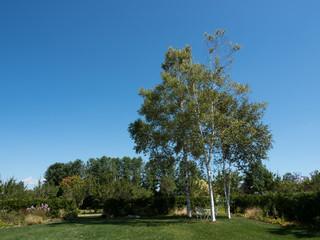 ガーデンの木々