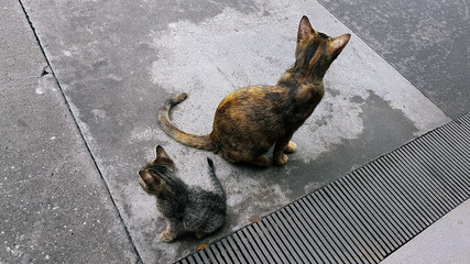 Stray cats back to back on the street.