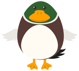 Duck with round body