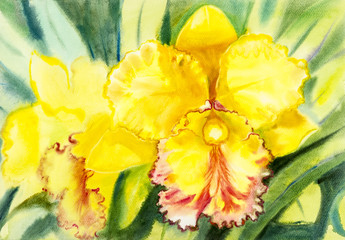 Abstract watercolor original painting yellow,orange color of orchid flower and green leaves in blue background.