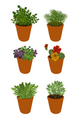 Isolated different herbs in a pots: bay leaves, arugula,basil,parsley, dill and nasturtium. Herbs on a white background, vector illustration.
