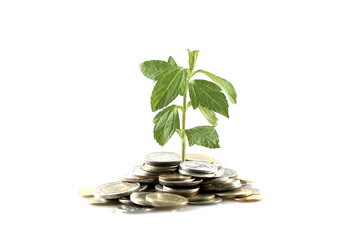 Money growth with tree and coin in investment concept.