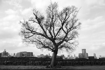 the tree stand alone in big city (Osaka, Japan)