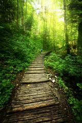 Plitvicka Forest