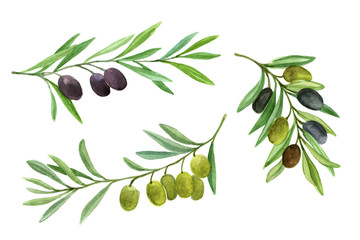 Olives set. Olive branch with berries