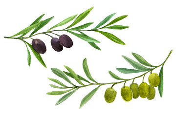 Two olive branch with berries