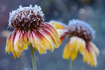 Blumen 854