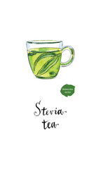 Ecological herbal tea in glass cup with stevia leaves in watercolor