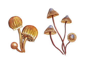 Set of mushrooms toadstools, watercolor painting on white background, isolated with clipping path.