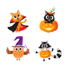 Set of animal characters - cat, owl, raccoon - in Halloween costumes, cartoon vector illustration isolated on white background. Set of animal characters celebrating Halloween, trick or treat