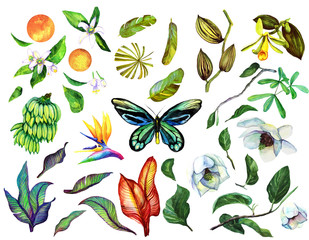 Tropical Watercolor set with isolated objects, banana branch, orchid, liana, butterfly, magnolia, banana leaves, flower sterilization, orange, neroli, orange flower.