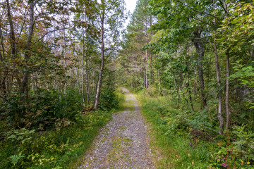 a path in a forest in Norway