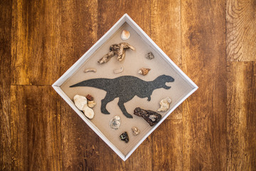 Handmade wall decoration for boy`s kids room. Flat Dinosaur Tyrannosaurus Rex surrounded by stones, seashells and sea wood in the white frame box on wooden background.