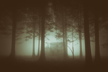gloomy forest with fog and a house