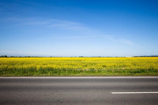Asphalt road among the summer field