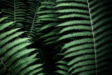 Green fern leaf background pattern