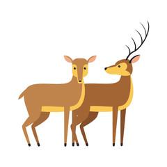 Deers animal cartoon icon vector illustration graphic design