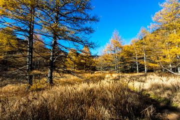 Autumn at Mt. Asama