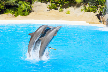 dolphins jump in the pool