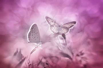 Pink and Purple World of Butterfly