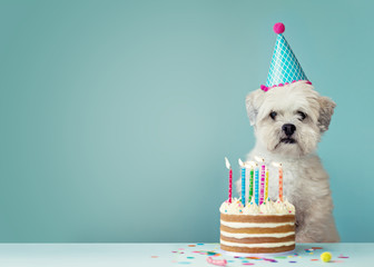 Dog with birthday cake