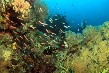 Scuba Diving in Dampier Strait, Raja Ampat, Indonesia