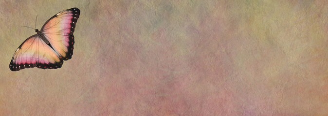 Butterfly Message Board - a single peach coloured open winged butterfly in left top corner on a wide rustic peach colored stone effect background with copy space for messages