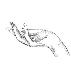 Hand, open palm. Illustration in sketch style. Hand drawn vector illustrations.