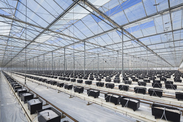 Hydroponic growing system on a greenhouse